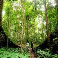 Kalimantan Maeng Da Kratom