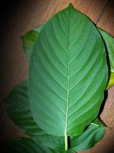 What Helps Kratom Withdrawal Fort Wayne