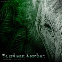 Elephant Kratom (White Vein Thai), Euphoric, Uplifting & Relaxing